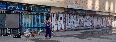 perros-grafiti